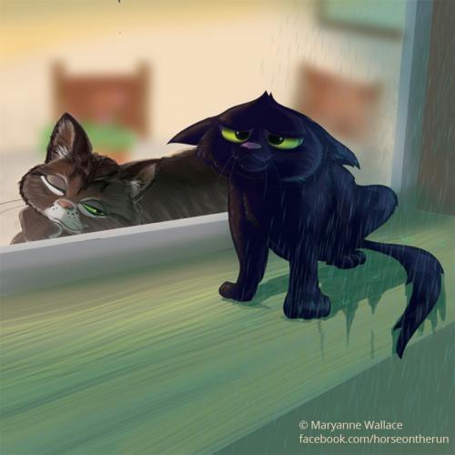 indoor-cat